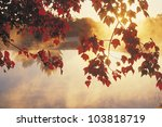 Sunrise Through Autumn Leaves ...