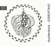 coffee beans vector... | Shutterstock .eps vector #1038197641