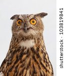 Stock photo eurasian eagle owl bubo bubo in front of a white background 103819841