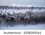 a herd of reindeers run... | Shutterstock . vector #1038200161