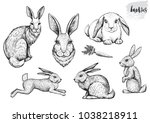 Stock vector rabbit and hare hand drawn vector illustrations running sitting bunnies and engraving portrait of 1038218911
