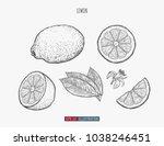 hand drawn lemon isolated....   Shutterstock .eps vector #1038246451