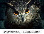 owl eyes close up. bird of prey ... | Shutterstock . vector #1038302854
