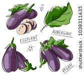 set illustration with eggplant... | Shutterstock .eps vector #1038311635