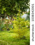 green spruce on a suburban area ...   Shutterstock . vector #1038342001