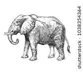 zoo. african fauna. elephant.... | Shutterstock .eps vector #1038354364