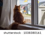 somali cat sunning in a window. | Shutterstock . vector #1038380161