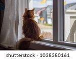 somali cat sunning in a window. | Shutterstock . vector #1038380161