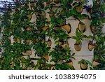 soilless cultivation of... | Shutterstock . vector #1038394075
