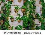 soilless cultivation of... | Shutterstock . vector #1038394081