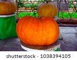 pick the pumpkin | Shutterstock . vector #1038394105