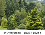 the peace lives in this garden... | Shutterstock . vector #1038415255