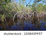 the mangroves of everglades... | Shutterstock . vector #1038439957