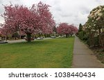 gorgeous blossoming cherry... | Shutterstock . vector #1038440434