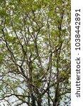 Small photo of Allover spread branches tree