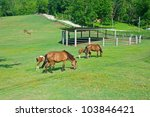 Group Of Horses In Farm