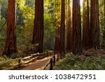 trail through redwoods in muir... | Shutterstock . vector #1038472951