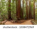 trail through redwoods in muir... | Shutterstock . vector #1038472969