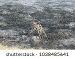 Small photo of weeds survive fire