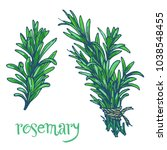 rosemary green herb branches... | Shutterstock .eps vector #1038548455