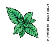 mint leaf  peppermint green... | Shutterstock .eps vector #1038548605