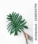 female holding monstera leaf on ... | Shutterstock . vector #1038555799