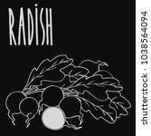 isolate ripe radish root... | Shutterstock . vector #1038564094