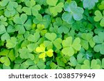 Large Green Clover Field