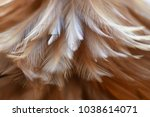 close up chicken feathers macro.... | Shutterstock . vector #1038614071