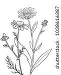 vectorhand drawn medical herbs  ... | Shutterstock .eps vector #1038616387