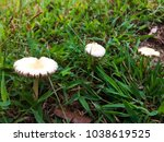 Mushrooms That Grow Up In The...