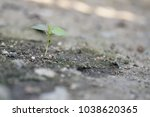 the little tree in the world .... | Shutterstock . vector #1038620365