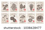 Labels With Mushrooms. Set...