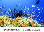 underwater world landscape | Shutterstock . vector #1038706621