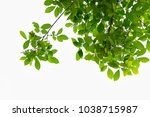 golden green leaves and... | Shutterstock . vector #1038715987