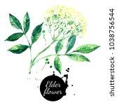 watercolor hand drawn elder... | Shutterstock . vector #1038756544