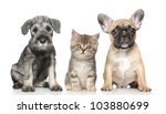 Stock photo kitten and puppy on a white background 103880699