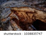 wood is a gift of nature  ... | Shutterstock . vector #1038835747