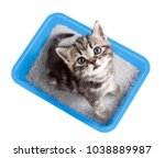 Stock photo cat top view sitting in litter box isolated 1038889987