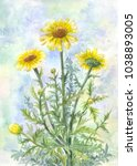 bouquet of yellow wild... | Shutterstock . vector #1038893005