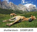 Sleeping Horse  Val Gardena ...