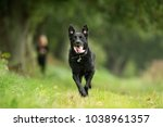 Stock photo purebred adult dog outdoors in the nature on a sunny day during late spring and early summer 1038961357