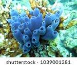 blue sponge haliclona spec. | Shutterstock . vector #1039001281