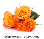 Three Orange Roses  Isolated O...