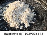 antipodes are the food of...   Shutterstock . vector #1039036645