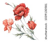bouquet with poppies. hand draw ... | Shutterstock . vector #1039130581