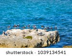 A Group Of Seagulls On A Big...