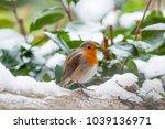 Beautiful Robin Bird Redbreast...