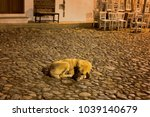 stray dog sleeps on... | Shutterstock . vector #1039140679