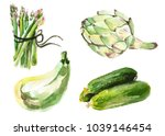 watercolor painted collection... | Shutterstock .eps vector #1039146454